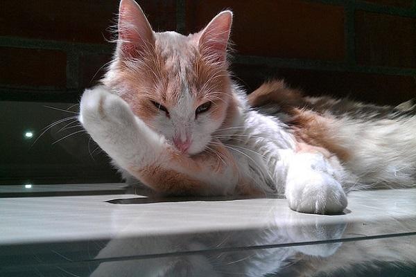 Pflegeheim nicht ohne meine Katze